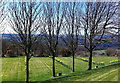 NZ1654 : Leafless trees, early May by Pauline E