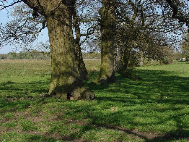 Tree Line,Papercourt Meadows