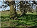 TQ0356 : Tree Line,Papercourt Meadows by Alan Hunt