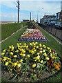 TA3108 : Kingsway flower beds Cleethorpes by Steve  Fareham