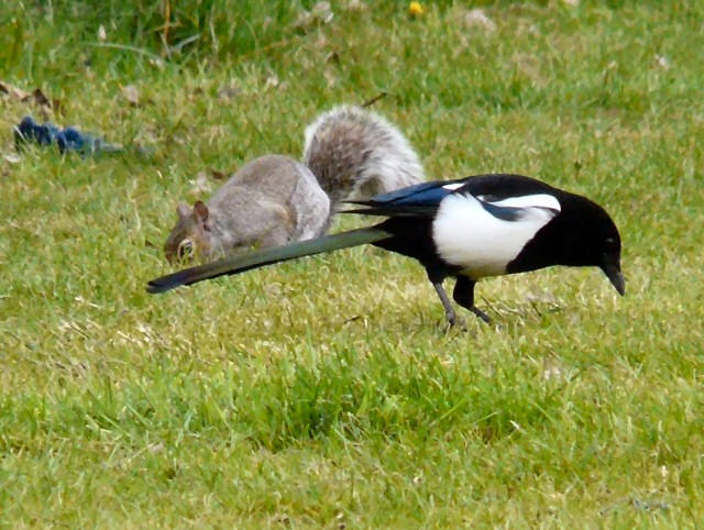 A squirrel and a magpie