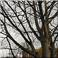SJ9594 : A woodpigeon awaits by Gerald England
