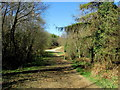 TQ7715 : A Junction of Rides in Great Wood by Chris Heaton