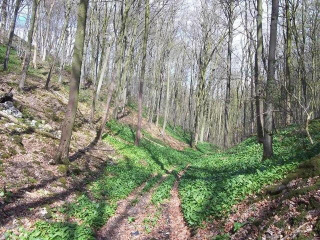 Woodland Path near Griffe Grange Farm