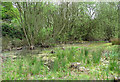 TG3607 : Wet area at the bottom of disused gravel pit, Buckenham Woods by Evelyn Simak