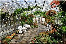 NJ9304 : In the Winter Gardens, Duthie Park by Bill Harrison