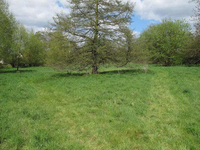 Piper's Meadow, Great Bardfield