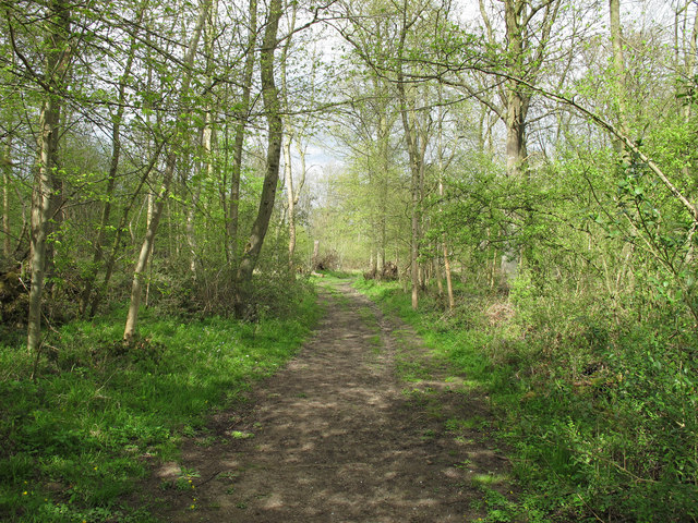 Track in West Wood Nature Reserve