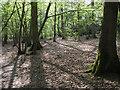TL9720 : Needle Eye Wood, Roman River Valley Nature Reserve by Roger Jones