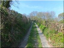SJ2637 : Track between well trimmed hedges by John Haynes
