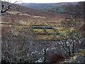 NH0462 : Sheepfold across the river by David Brown