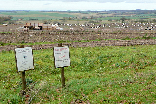 Piggery at Grove Farm