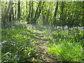 TQ7764 : North Dane Wood, Lords Wood by David Anstiss