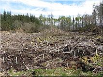 SH6441 : Cleared forestry land near Tan-y-Bwlch by Gareth James