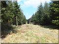 SJ2433 : Footpath along a forestry access track by John Haynes