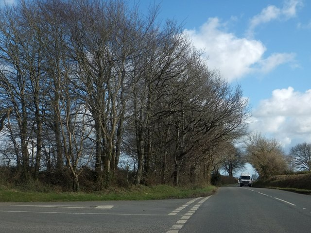 Trees by the road to Riddlecombe