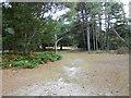 SZ0187 : Woodland Walk on Brownsea by Nigel Mykura