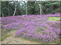 SZ0187 : Heather on Brownsea by Nigel Mykura