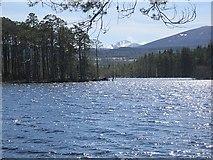 NH9617 : Loch Mallachie by Richard Webb