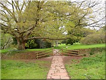 ST5071 : Garden gate and boundary - Tyntesfield by Sarah Smith