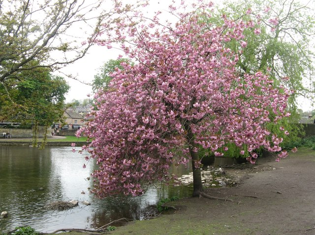 Blossom by the river!