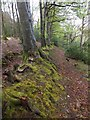 SS5018 : Hedgebank in the woodland of RHS Rosemoor by David Smith