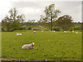 SJ8475 : Sheep Pasture off Congleton Road by David Dixon