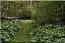 TF4077 : Butterbur by the footpath from Belleau Bridge to Belleau by Chris
