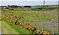 J4973 : The Castlebawn site, Newtownards (2013-5) by Albert Bridge