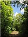 TQ3871 : Green Chain Walk, Beckenham Place Park by Derek Harper