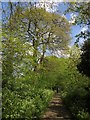 TQ3871 : Downham Woodland Walk by Derek Harper