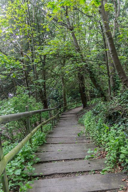 Woodland Walk, Castle Hedingham, Colne Valley, Essex