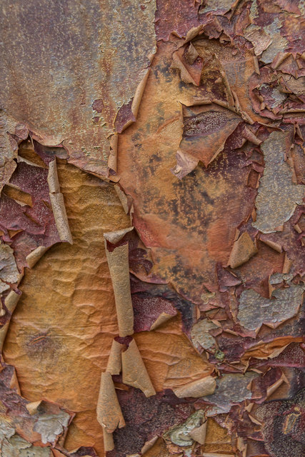 Bark, Castle Hedingham, Colne Valley, Essex