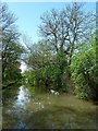 SP4478 : Trees impinging on the Oxford Canal by Rob Farrow
