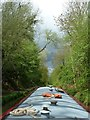 SP4479 : Oxford Canal enters wooded cutting by Rob Farrow