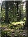 SS8122 : Beaple's Wood by Derek Harper