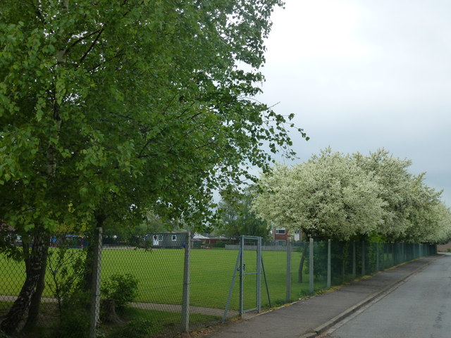 Blossom in the playground