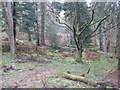 NH1980 : Lael Forest Garden by M J Richardson