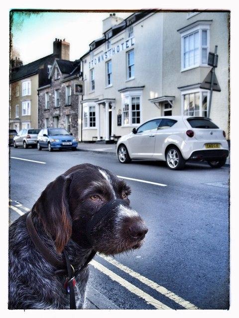 Harveywetdog considers Brown's Hotel