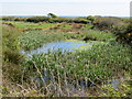 SM8716 : Wetlands near Rogeston Mount by Peter Wood