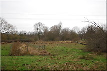 TL3706 : Silvermeade Reserve by N Chadwick