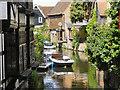 TR1457 : River Great Stour, Canterbury by David Dixon