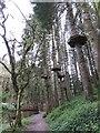 SN0613 : Elevated walkway at Bluestone holiday camp by Gareth James