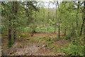 NU0801 : Birch forest in the Cragside Estate by Bill Boaden