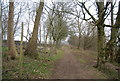 TR0449 : North Downs Way, King's Wood by N Chadwick