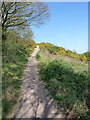 SJ4606 : Narrow path up onto Spring Coppice by Richard Law