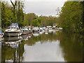 TQ7557 : River Medway, Ringlestone by David Dixon