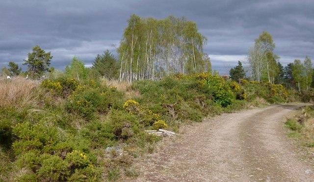 Track in Rheindown Wood