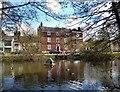 TQ2497 : Duckpond, Monken Hadley by Des Blenkinsopp