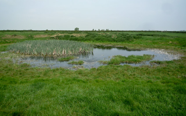 Pond in Field